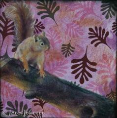 © Squirrel! Jana R. Johnson