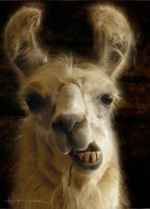 Llama © Jana R. Johnson