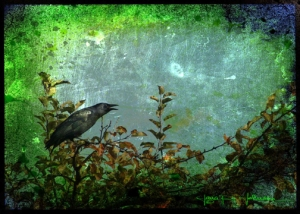 Crow Caw © Jana R. Johnson