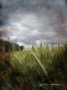 Fantasy Wheat © Jana R. Johnson