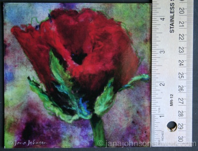 © Jana R. Johnson Poppy 4x4